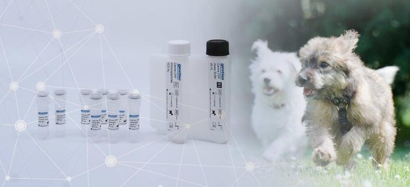 Canine-CRP-produkter-bilde-e1541675775467