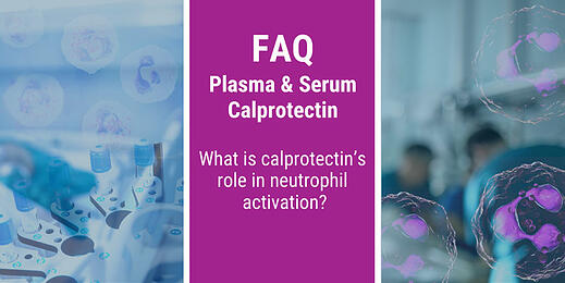 FAQ: What is calprotectin's role in neutrophil activation?