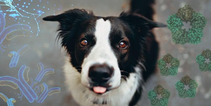 canine crp immunoassay. Photo credit: Helena Lopez, pexel