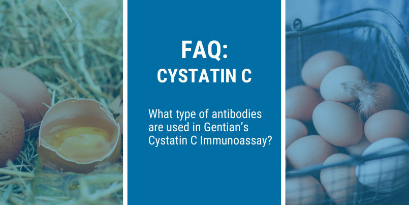 What type of antibodies are used in Gentian's Cystatin C Immunoassay?