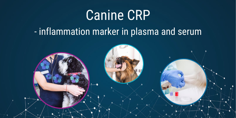 Canine CRP - open channel, turbidimetric channel